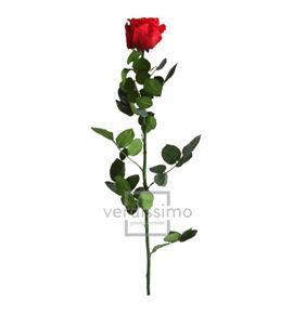 Rosa amorosa preservada estandar prz/1200 - PRZ1200-05-ROSA-TALLO-STANDARD