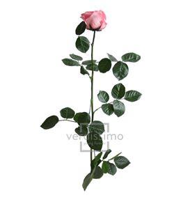 Rosa amorosa preservada estandar prz/1420 - PRZ1420-05-ROSA-TALLO-STANDARD