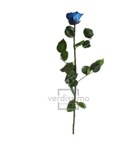Rosa amorosa preservada estandar prz/1630 - PRZ1630-05-ROSA-TALLO-STANDARD
