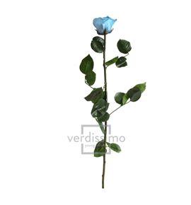 Rosa amorosa preservada estandar prz/1640 - PRZ1640-05-ROSA-TALLO-STANDARD