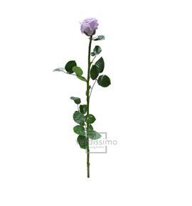 Rosa amorosa preservada estandar prz/1830 - PRZ1830-05-ROSA-TALLO-STANDARD