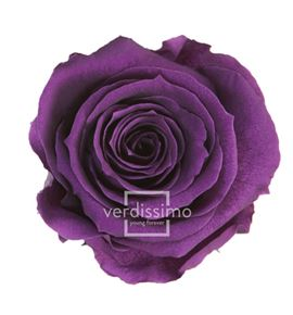 Rosa amorosa preservada estandar prz/1840 - PRZ1840-05-ROSA-TALLO-STANDARD