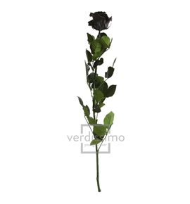 Rosa amorosa preservada estandar prz/1990 - PRZ1990-05-ROSA-TALLO-STANDARD