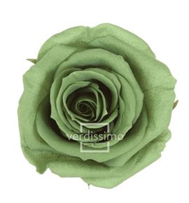 Rosa amorosa preservada granel prz/3150 - PRZ3150-03-ROSA-TALLO-STANDARD