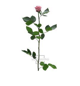 Rosa amorosa preservada granel prz/3480 - PRZ3480-03-ROSA-TALLO-STANDARD