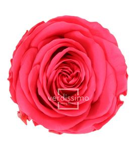 Rosa amorosa preservada granel prz/3490 - PRZ3490-03-ROSA-TALLO-STANDARD