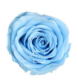 Rosa amorosa preservada granel prz/3640 - PRZ3640-03-ROSA-TALLO-STANDARD