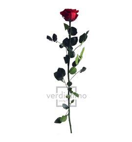 Rosa amorosa preservada granel prz/3800 - PRZ3800-03-ROSA-TALLO-STANDARD