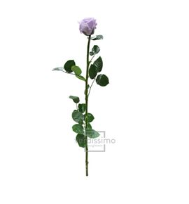 Rosa amorosa preservada granel prz/3830 - PRZ3830-03-ROSA-TALLO-STANDARD