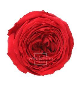Rosa preservada jardin 6 unid rga/2200 - RGA2200-03-ROSA-JARDIN