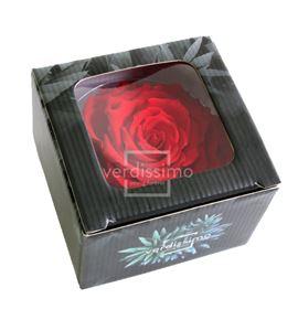 Rosa preservada king rsk/2200 - RSK2200-03-ROSA-KING