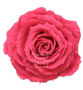 Rosa preservada king rsk/2490 - RSK2490-03-ROSA-KING