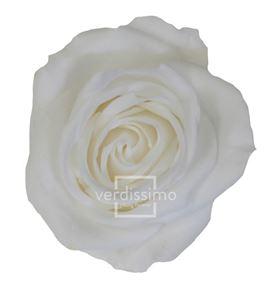 Rosa preservada media 8 unid rme/3000 - RME3000-03-ROSA-MEDIUM