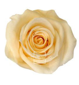 Rosa preservada media 8 unid rme/3020 - RME3020-03-ROSA-MEDIUM