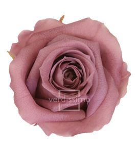 Rosa preservada media 8 unid rme/3480 - RME3480-03-ROSA-MEDIUM