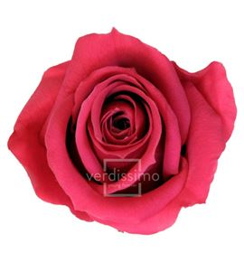 Rosa preservada media 8 unid rme/3490 - RME3490-03-ROSA-MEDIUM
