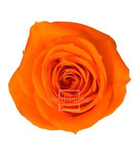 Rosa preservada media 8 unid rme/3530 - RME3530-03-ROSA-MEDIUM