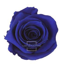 Rosa preservada media 8 unid rme/3630 - RME3630-03-ROSA-MEDIUM