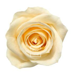 Rosa preservada mini 12 unid rsm/1021 - RSM1021-03-ROSA-MINI