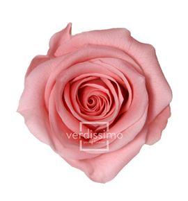 Rosa preservada mini 12 unid rsm/1451 - RSM1451-03-ROSA-MINI