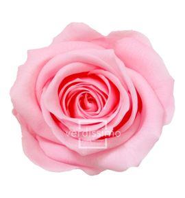 Rosa preservada mini 12 unid rsm/1471 - RSM1471-03-ROSA-MINI