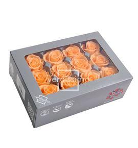 Rosa preservada mini 12 unid rsm/1551 - RSM1551-03-ROSA-MINI