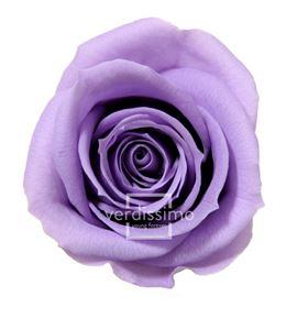 Rosa preservada mini 12 unid rsm/1831 - RSM1831-03-ROSA-MINI