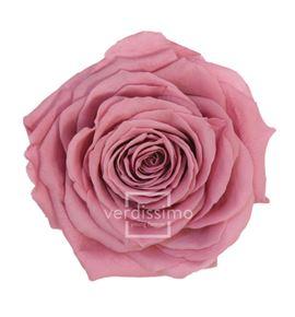 Rosa preservada premium 4 unid rsg/2480 - RSG2480-03-ROSA-PREMIUM