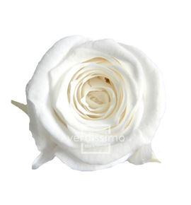 Rosa preservada princesa 16 unid rsp/4001 - RSP4001-03-ROSA-PRINCESS