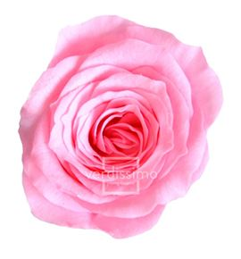 Rosa preservada princesa 16 unid rsp/4420 - RSP4470-03-ROSA-PRINCESS