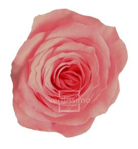 Rosa preservada princesa 16 unid rsp/4450 - RSP4450-03-ROSA-PRINCESS