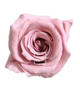 Rosa preservada princesa 16 unid rsp/4480 - RSP4480-03-ROSA-PRINCESS