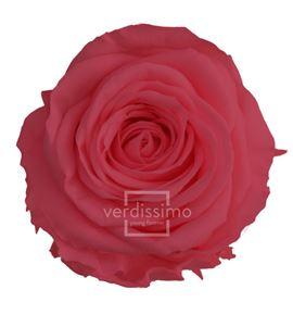 Rosa preservada princesa 16 unid rsp/4490 - RSP4490-03-ROSA-PRINCESS