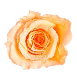 Rosa preservada princesa 16 unid rsp/4550 - RSP4550-03-ROSA-PRINCESS