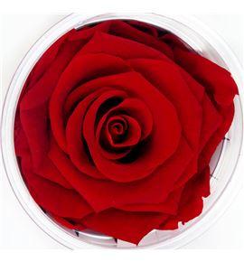 Rosa preservada rojo 6 unid - ROSPREROJ6