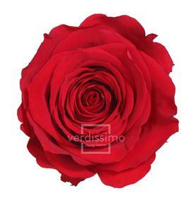 Rosa preservada standart 6 unid rst/220g - RST220G-03-ROSA-STANDARD