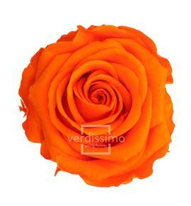 Rosa preservada standart 6 unid rst/253g - RST253G-03-ROSA-STANDARD