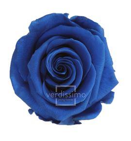 Rosa preservada standart 6 unid rst/263g - RST263G-03-ROSA-STANDARD