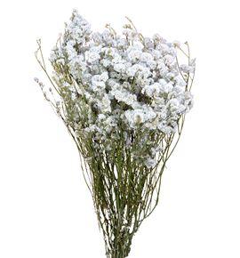 Limonium seco white - LIMCHIPREBLA