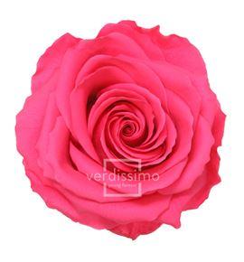 Rosa preservada premium 4 unid rsg/2490 - RSG2490-03-ROSA-PREMIUM