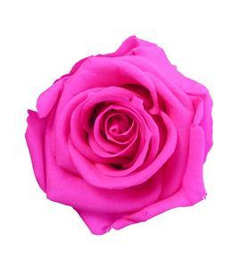 Rosa preservada media 8 unid rme/3430 - RME3430