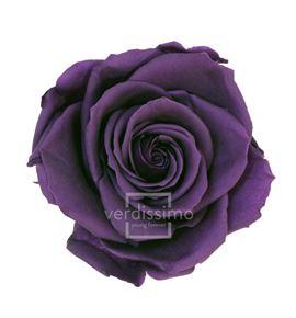 Rosa preservada media 8 unid rme/3840 - RME3840