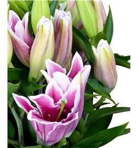 Lilium oriental hol marlon 100 - LOHMAR