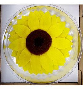 Girasol preservado amarillo - GIRPREAMA