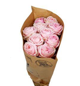 Rosa hol angie romantica sweet 60 - RGRANGROMSWE