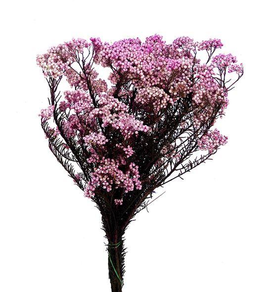 Flor arroz preservado rosa - FLOARRPREROS