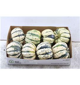 Calabaza sweet dumpling - CALSWEDUM