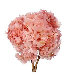 Hortensia preservada rosa suave - HORPREROSSUA