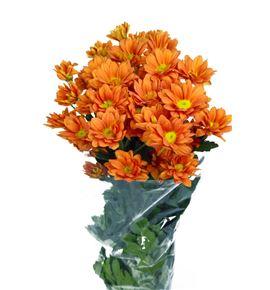 Marg orange day - MORADAY