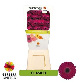 Gerbera classico 50 x15 - GERCLA5015